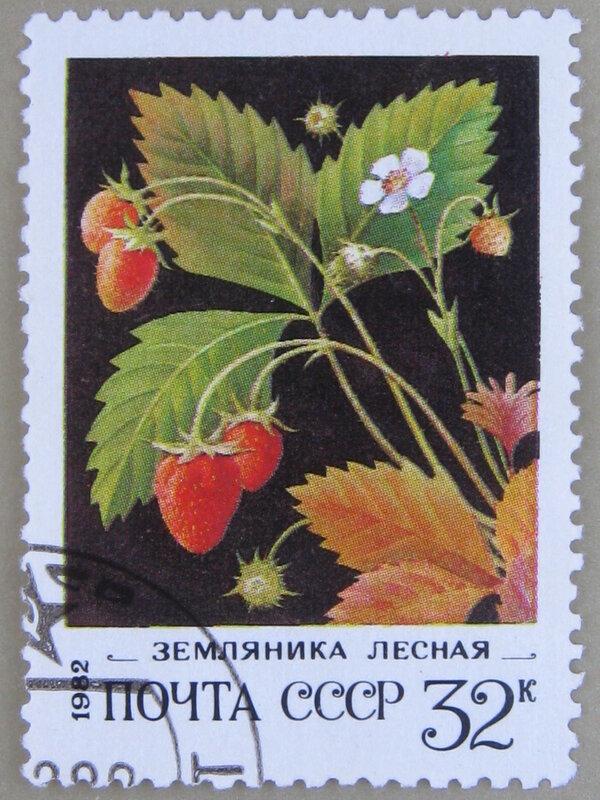 Лесная земляника (Fragaria vesca).