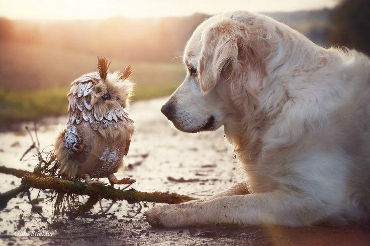 собаки Gabi Stickler
