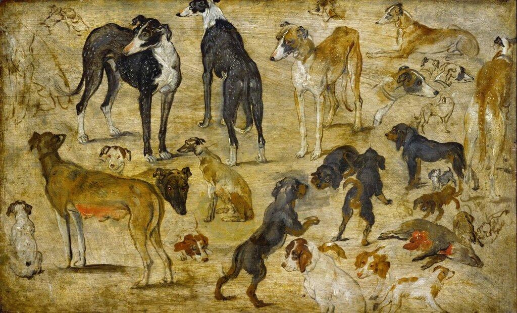 Штудия собак (ок.1616) (Вена, Музей истории искусств) (3,68 МБ).jpg