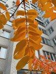 630-07.jpg Осень в городе.