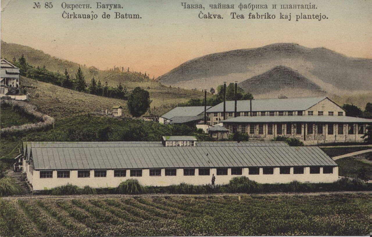 Окрестности Батума. Чаква, чайная фабрика и плантация