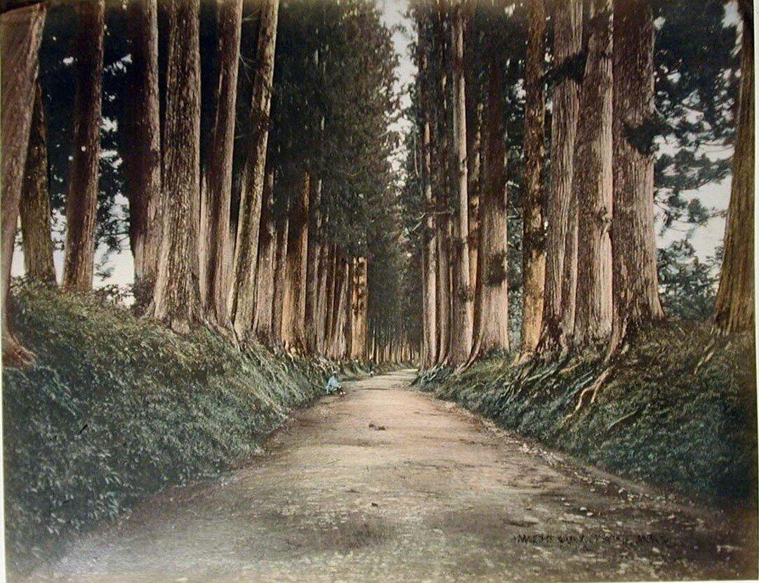 Дорога на Никко
