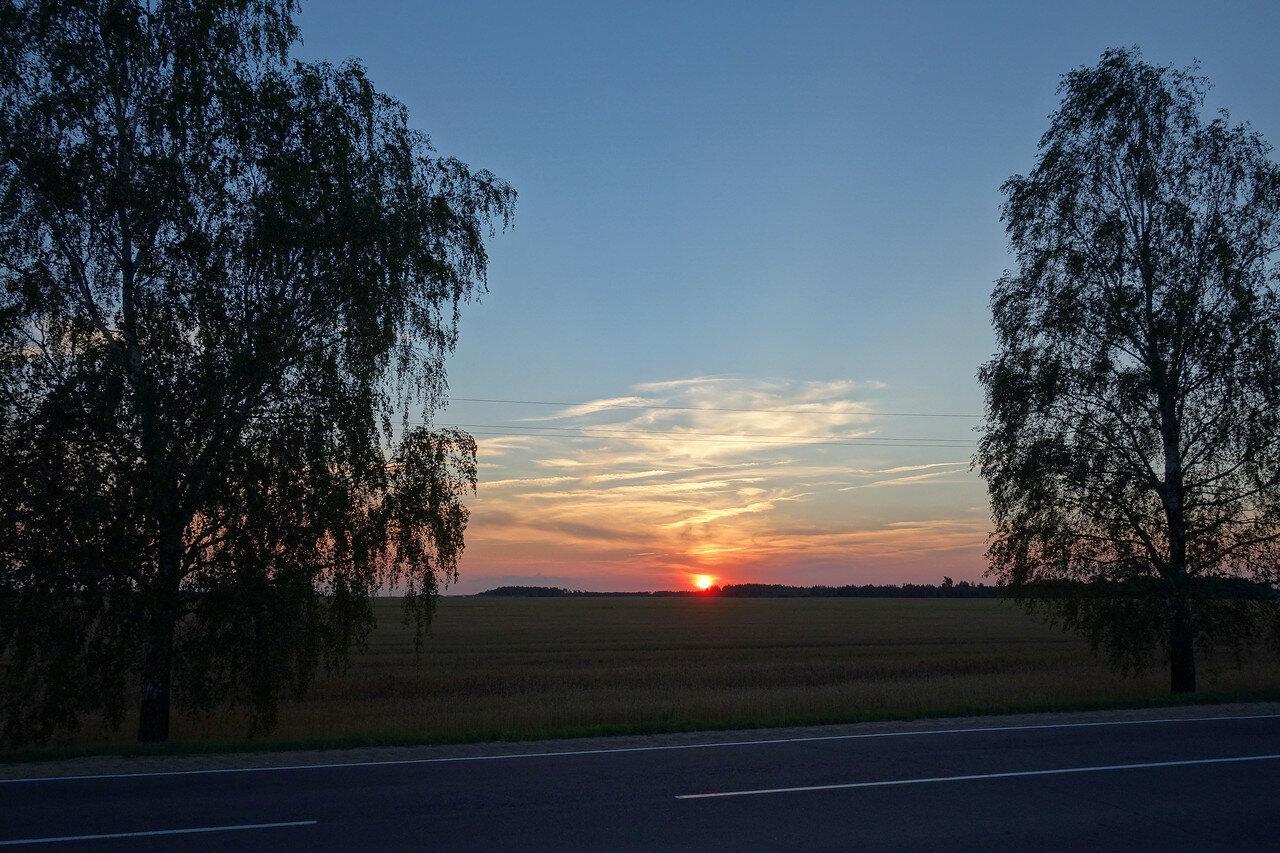 березы и солнце
