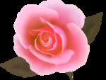 роза56.png