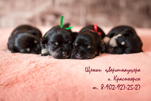 https://img-fotki.yandex.ru/get/15495/211106628.b1/0_1311a4_242948a9_L.jpg