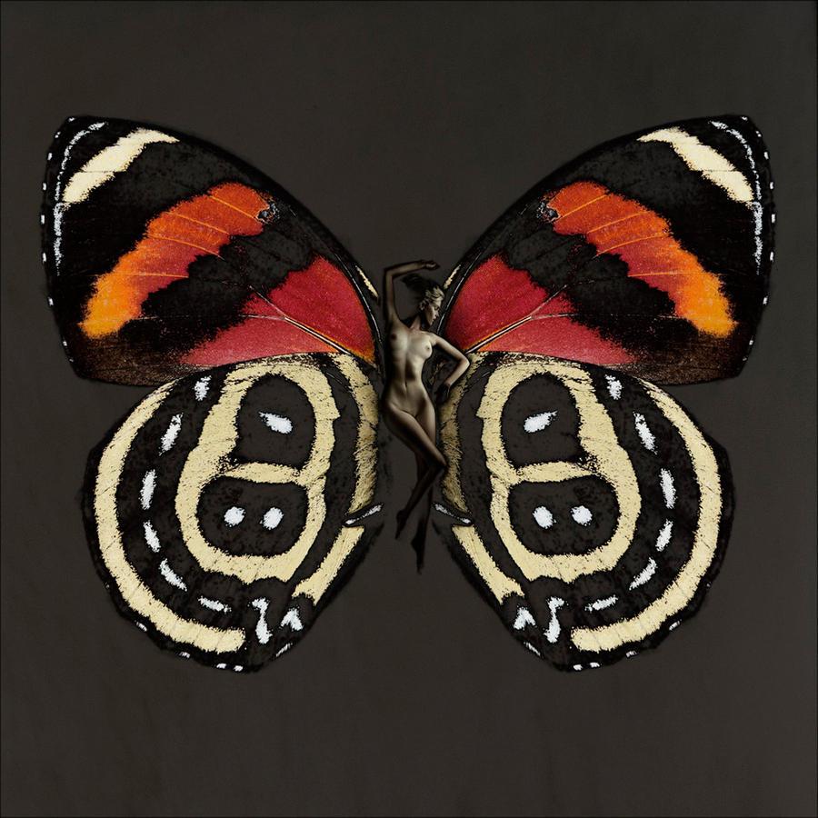 Карстен Витте и его ночные бабочки