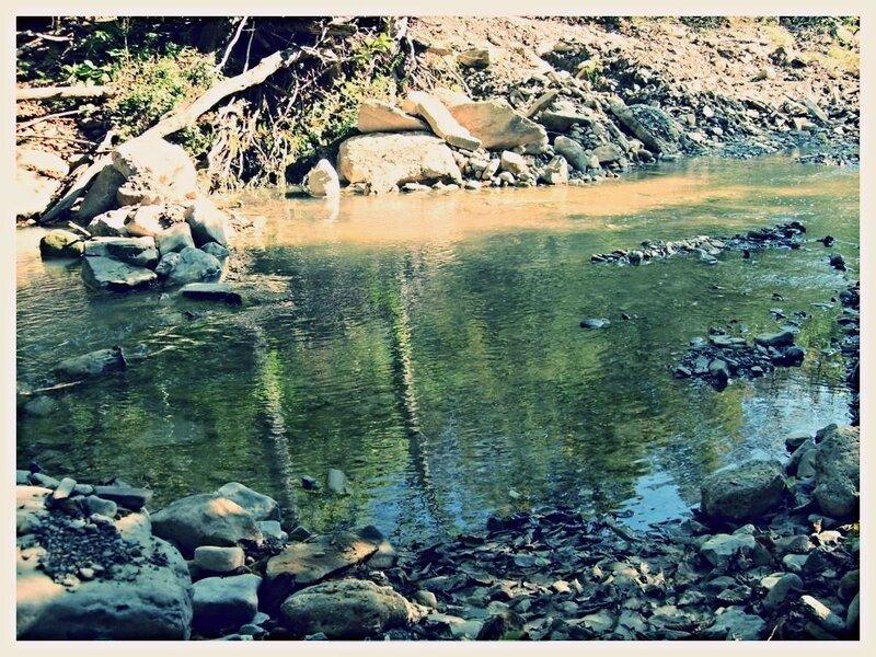 11 октября 2008, под Горячим Ключом, у реки (58).JPG