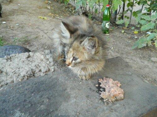 Бездомные котики