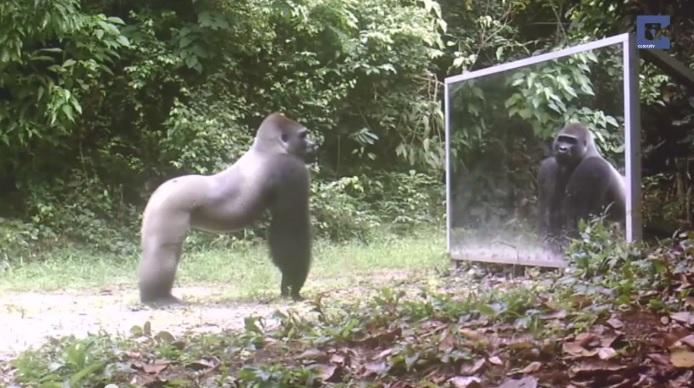 Дикие животные и зеркало
