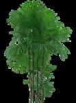 пальма.png