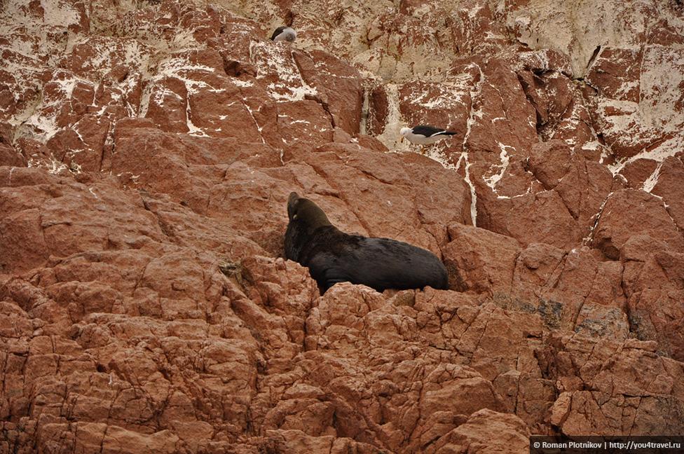 0 161749 339cc23b orig Национальный парк Паракас и острова Бальестас в Перу