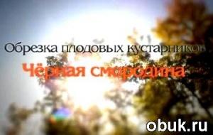 Книга Обрезка плодовых кустарников. Черная смородина (2011) DVDRip