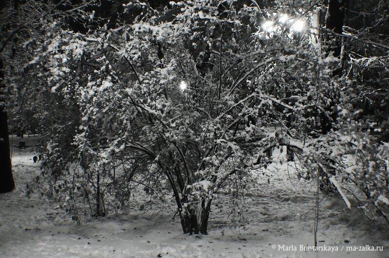 Липки, Саратов, 13 декабря 2014 года