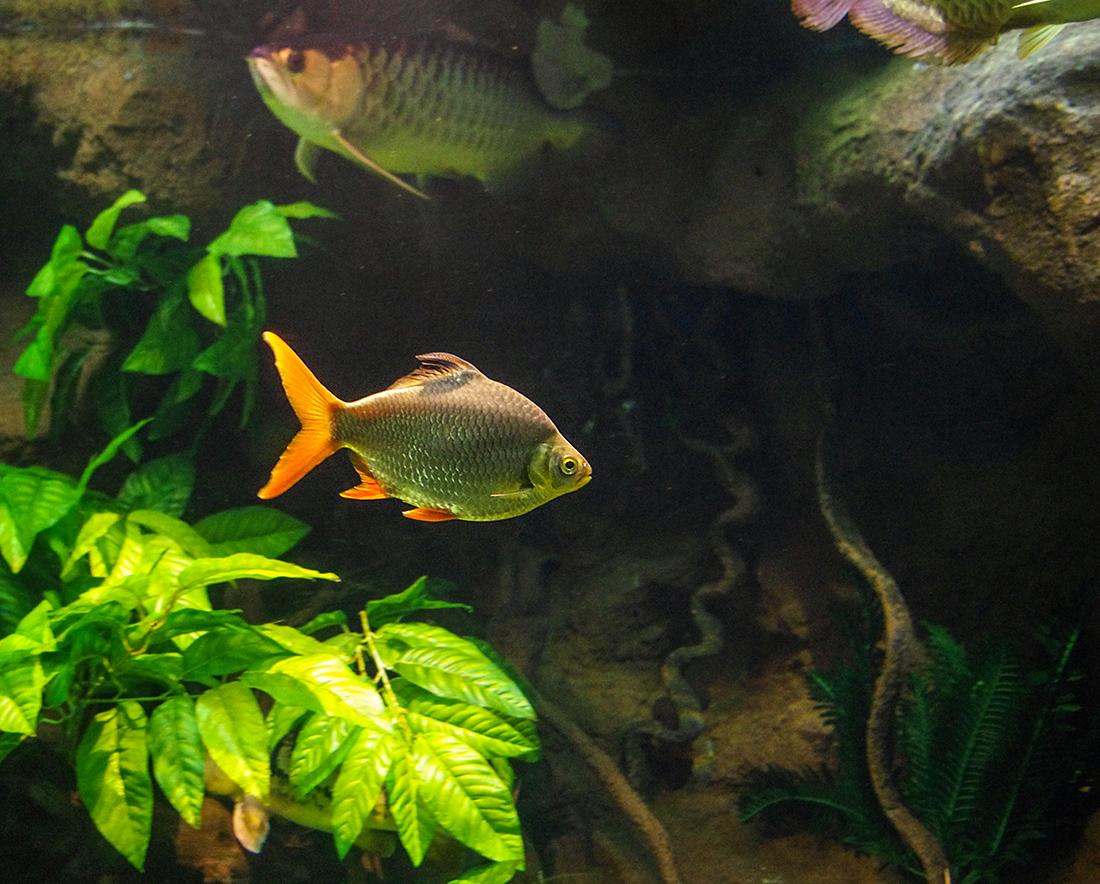 Рыбёшка