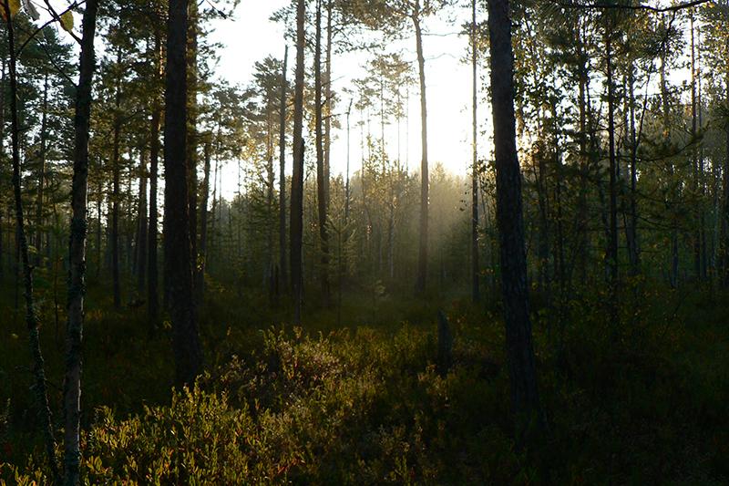краски осени туман на болоте