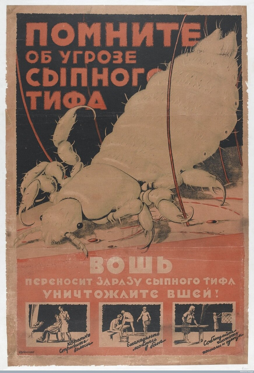 L0042087 The typhus louse, against which Russian citizens are urged