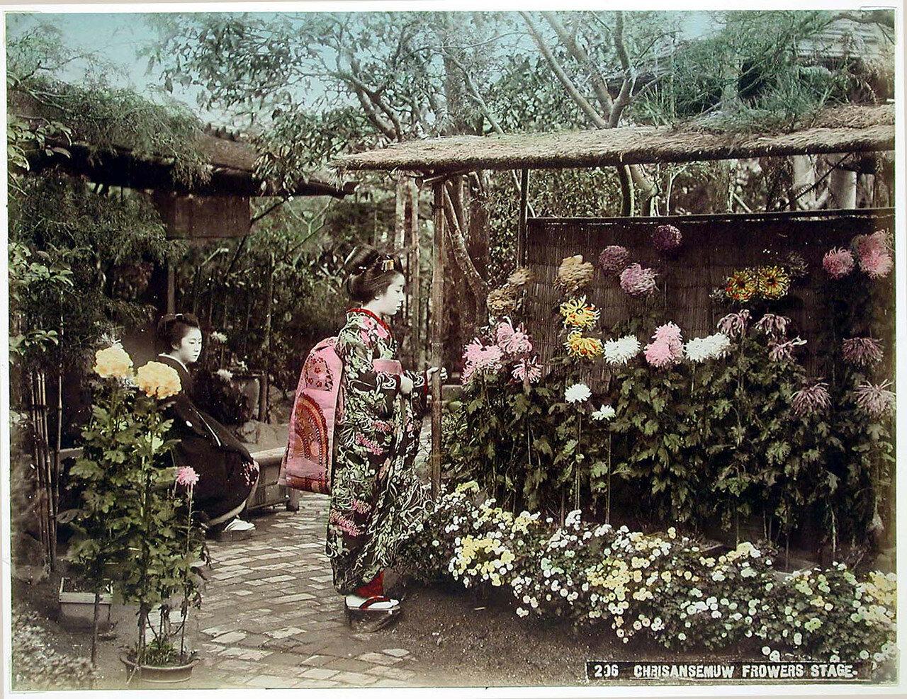 Сад хризантем. 1890