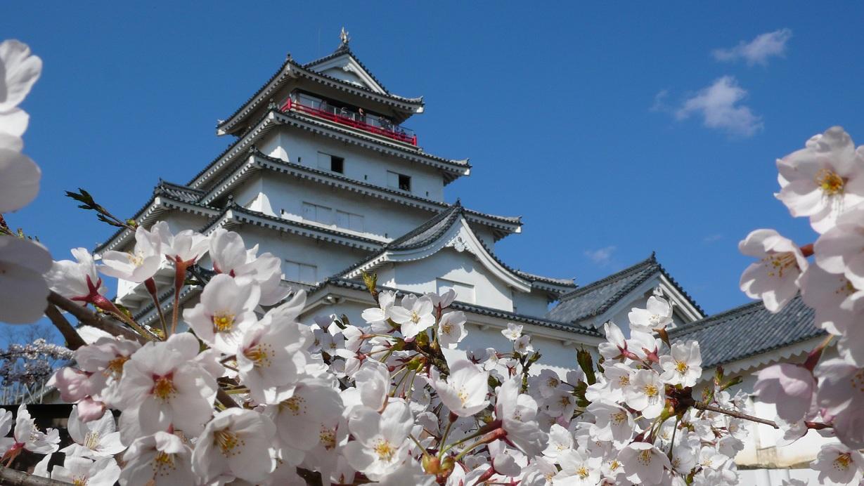 Замок Осака Япония сакура  № 3700690 бесплатно
