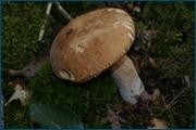 http://img-fotki.yandex.ru/get/15497/15842935.141/0_d0986_8a8b2ab4_orig.jpg