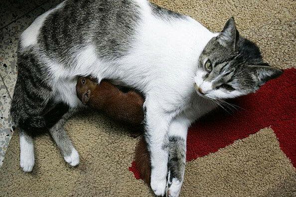 Дружная семейка, коты и белка