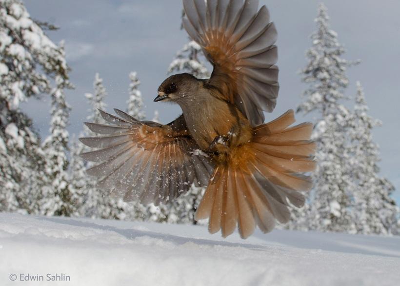 Победители конкурса фотографий дикой природы 0 12f8a1 5c6fe916 orig