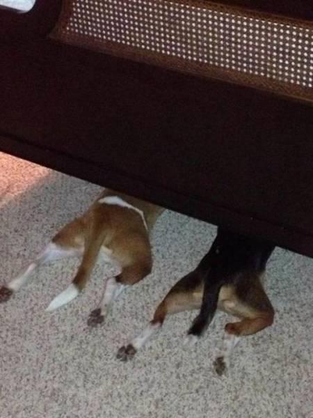 Собаки не умеют играть в прятки. Фотографии
