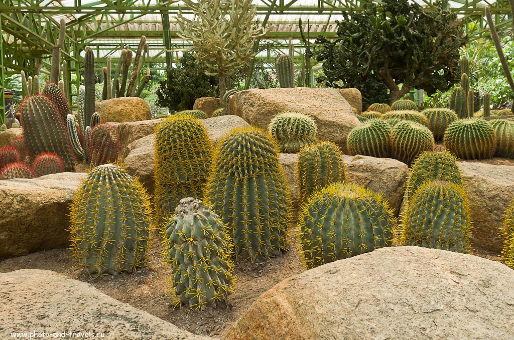 33. Кактусы в ботаническом саду Nongnooch