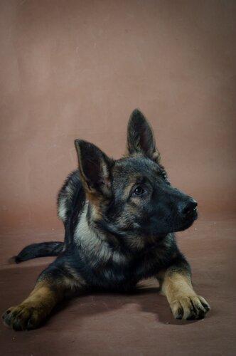 Родились щенки от Charly v. Rio Negro и Lola iz Peschanki - Страница 3 0_f419b_75cf3a96_L