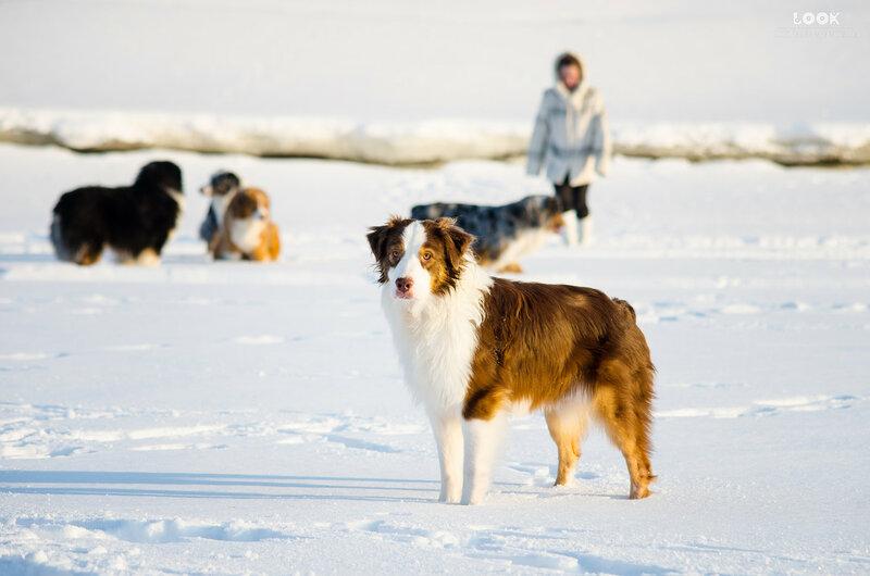 Мои собаки: Зена и Шива и их друзья весты - Страница 9 0_a854f_250bf9bb_XL