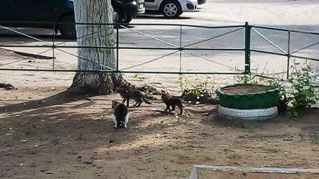 Стая кошек
