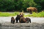 Андрей Киреев. Камчатские медведи