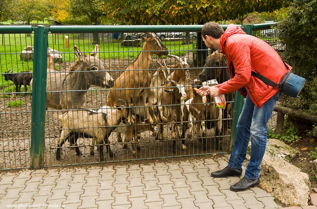 4. Каждой твари по паре... морковок. Экскурсия в зоопарк Опель в окрестностях Франкфурта. Интересные места.