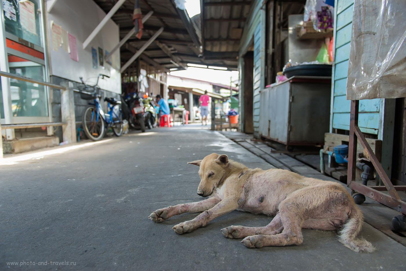 Фото 11. Зомби в тайской деревушке. Как мы ездили по Таиланду самостоятельно (500, 24, 3.2, 1/80)