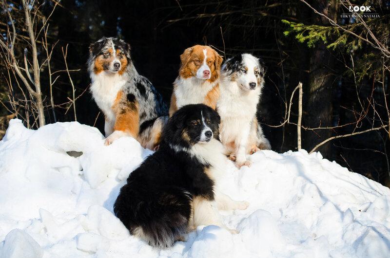 Мои собаки: Зена и Шива и их друзья весты - Страница 8 0_a8467_52173ec5_XL