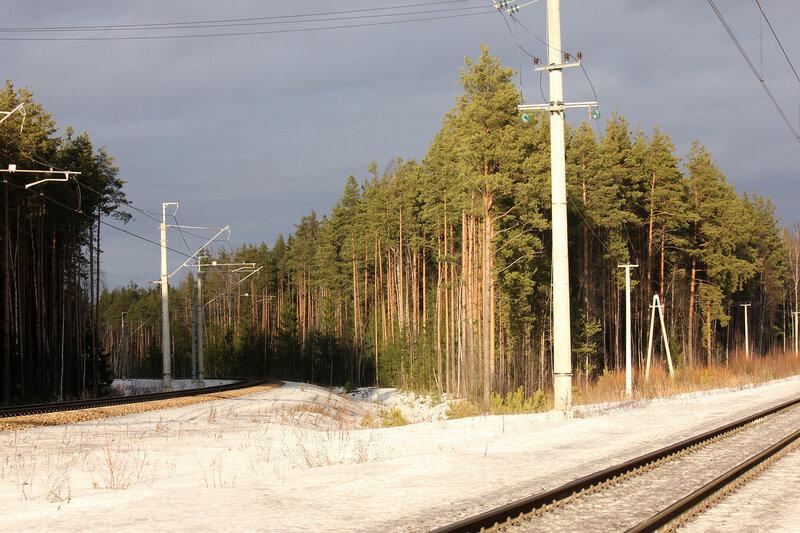 освещённый лес