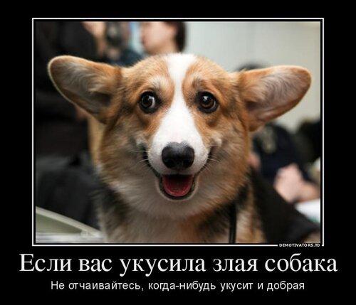 фото собаки злые