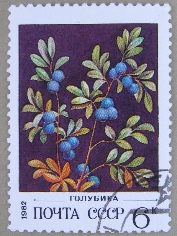 Голубика (Vaccinium uliginosum).