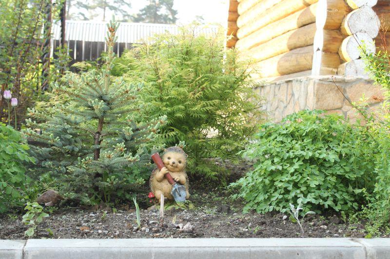 Пока нет настоящих животных очень интересно находить фигурки животных на клумбах базы. Еще одного милого ёжика мы обнаружили возле нашего домика. (09.06.2015)