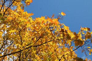 Осень золотая_2. Осенняя природа_2.