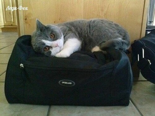Сама по себе гулёна (о кошках) 0_103ec1_af76b78e_L