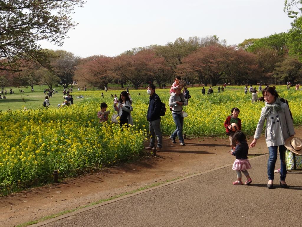 Японский парк Сёва в Тасикава /Showa Kinen Park city Tachikawa Japan