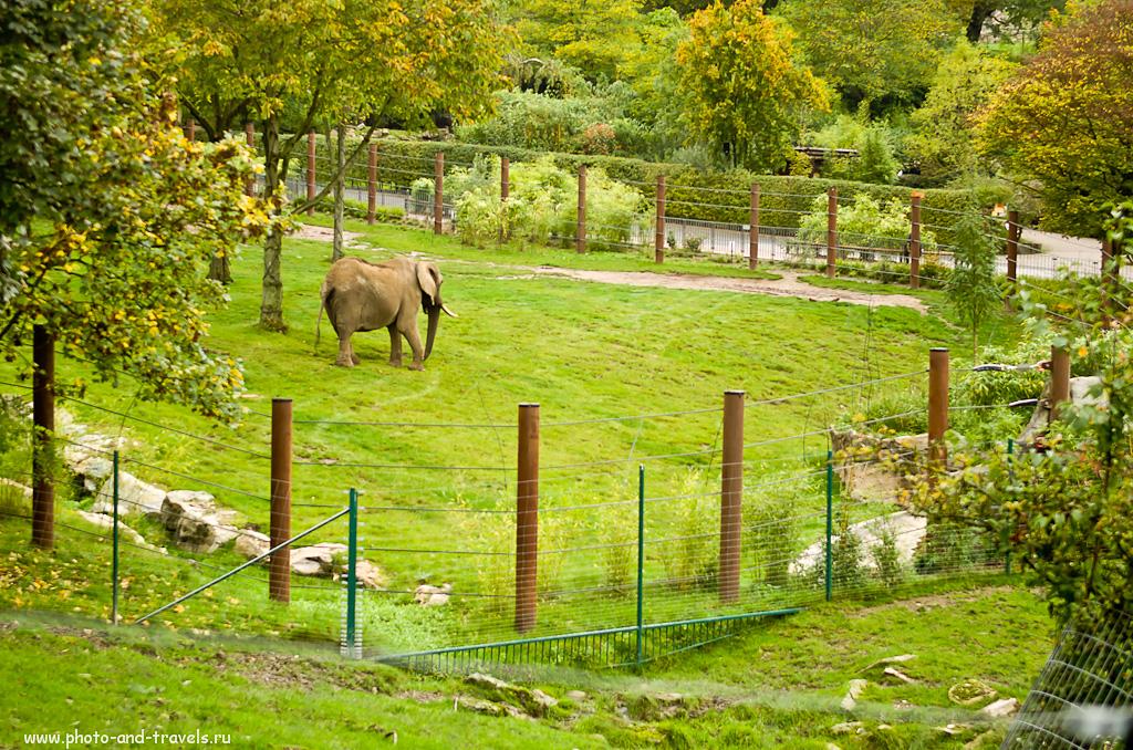 """5. Германская саванна для африканских слонов. Поездка в зоопарк """"Опель"""" в окрестностях Франкфурта-на-Майне. Отзывы туристов об экскурсиях."""