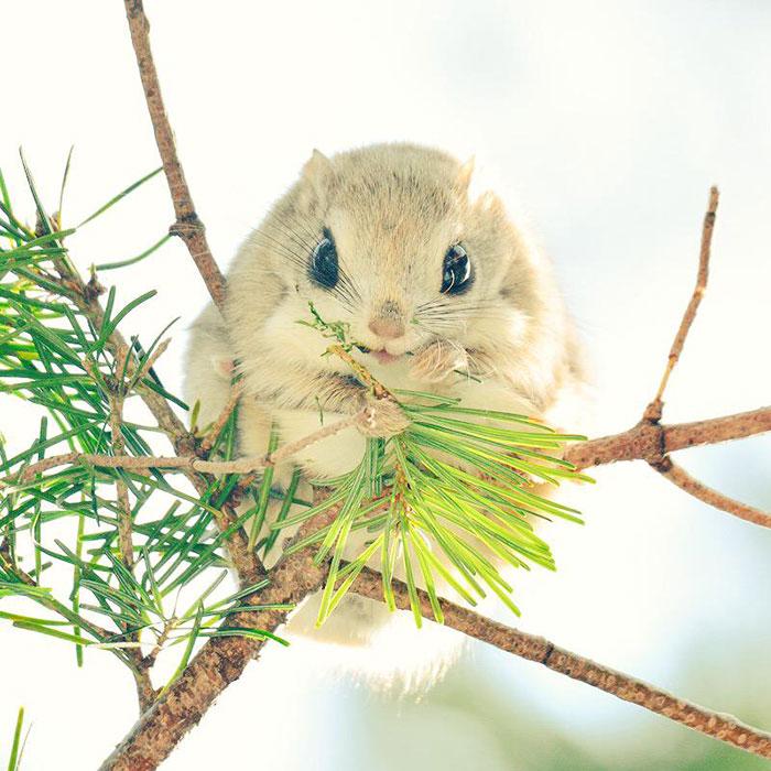 Остров Хоккайдо и его милые животные