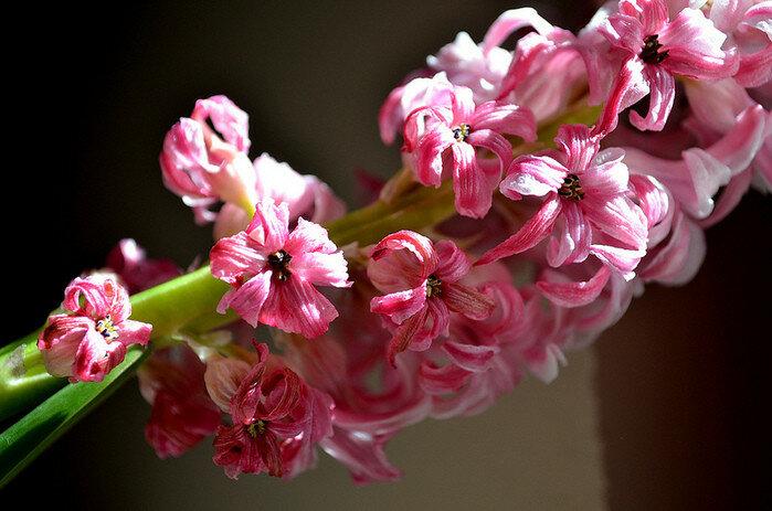 Красивые фотографии природы из Flickr 0 156ba4 f10cfe4b XL