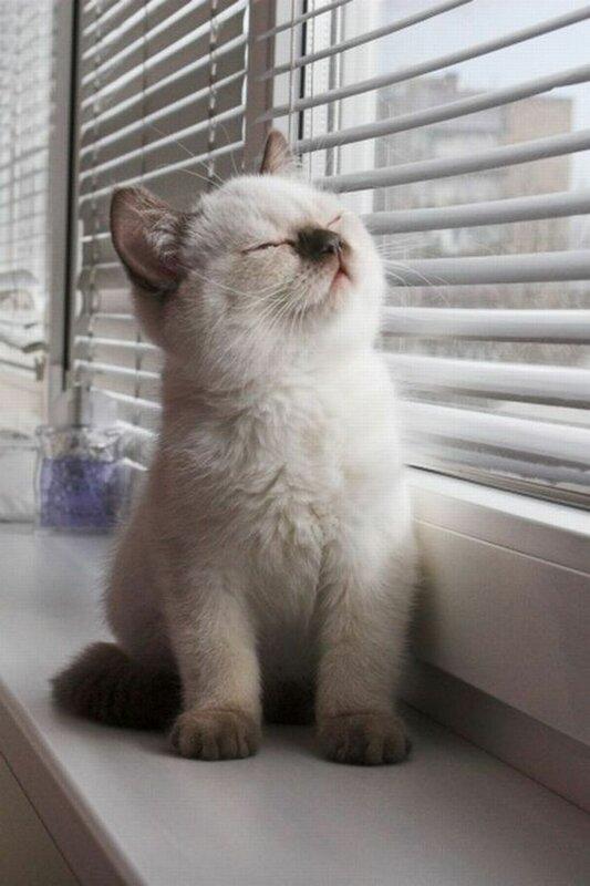 Taking the Sun