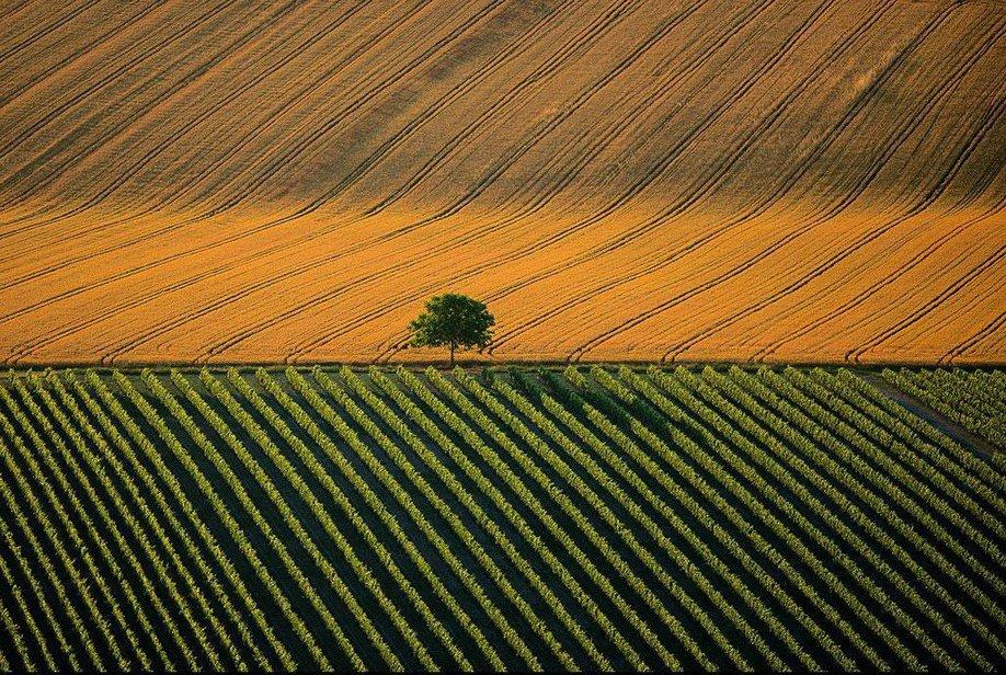 8. Сельскохозяйственный ландшафт возле города Коньяк, Франция.