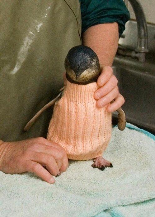 старик-вяжет-свитера-для-пингвинов4.jpg