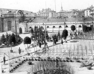 Экспонаты петербургских садоводств во дворе Манежа. 1908 г.