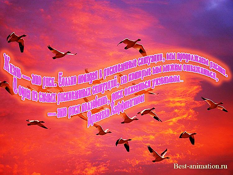 Цитаты великих людей - Что такое жизнь - Жизнь — это риск...