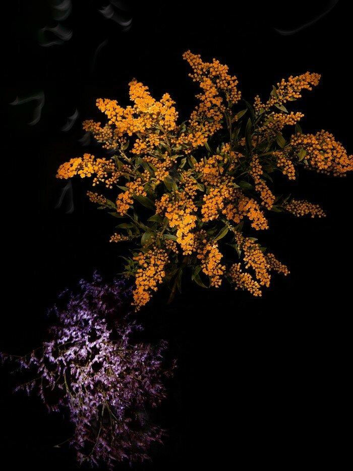 Flowerworks, Sarah Illenberger.jpg